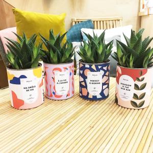 On dit que l'aloé est une plante detox pour la maison. Nous on voit surtout que les petits messages de @diaiwaie amènent de la bonne humeur! Bedroom in the new bar, mais oui on a envie de sourire😆.   #plantes #cactus #succulentes #conceptstore #toulouse #createurtoulouse